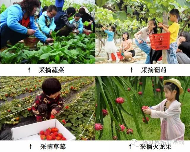F:园区采摘+农耕体验